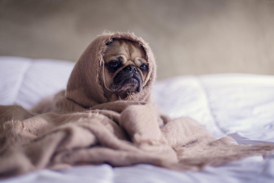 Dina sömnproblem kan vara orsaken till allt